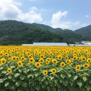 【競馬回顧】7月3/4日 函館・福島・小倉<2021>