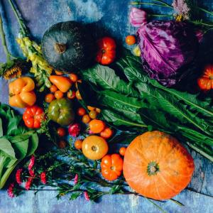 自家栽培の食材作りに。小さな栽培キットでプチガーデニング。