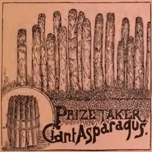 アスパラガス in 19世紀