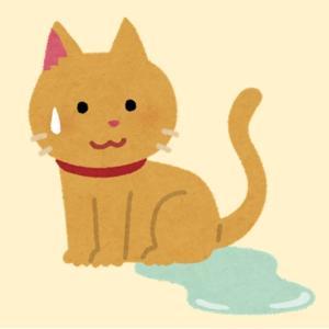 猫のおしっこ失敗について