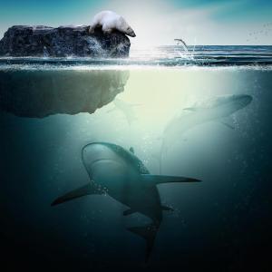 【雑談020】盲目になることが運命づけられた「鮫」がいるなんて・・・!