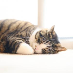 少し寝坊しました。