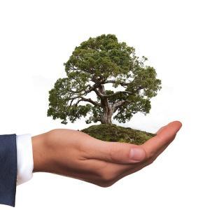 【高配当株投資の戦略】盆栽を育てるがごとく