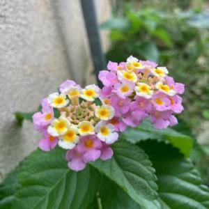 見知らぬ花。近況。