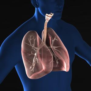 東洋医学で見る「肺」の働き〜気血津液・呼吸・悲しみ・皮膚〜