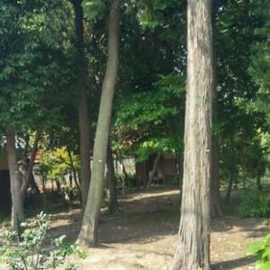 今朝の寺の風景
