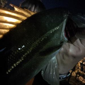 ★ ② 東京湾奥ボート ナイト☆彡シーバス 入れ食いなので検証してみた ② ~ ブラックバスルアーのでシーバスを釣る!~