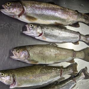 ★ ② BerryPark in FISH ON! 王禅寺(川崎市) 管理釣り場 エリアフィッシング ② ~ 超初心者さんが釣れるようにコーチ ~