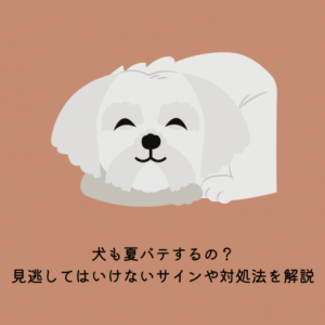 【要注意】犬も夏バテするの?見逃してはいけないサインや対処法を解説