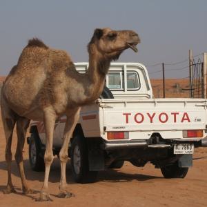 トヨタ自動車決算。1Q大幅増益も株価は下落。日本株軟調。