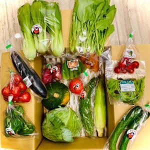 野菜の高騰を肌で感じた定期便 & 「クロワッサンサンド」