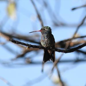 野鳥探索 (21.06.10) 悩める存在が判明したので安心