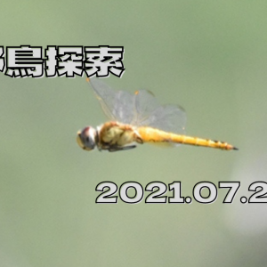野鳥探索 (21.07.26) 梅雨の空模様も撤退