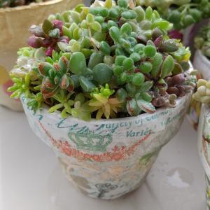 多肉 雨の日 小さい鉢の寄せ植え達♪