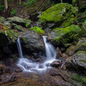 渓谷とユキノシタ2