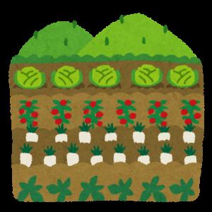 畑で野菜を育ててみる!