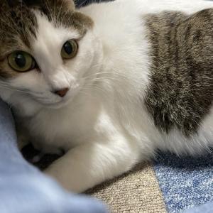 猫様との生活~おやつ編~