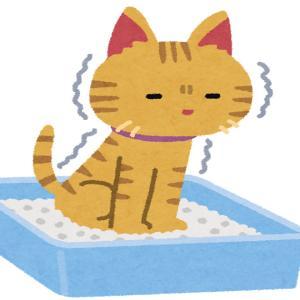 猫様との生活~おトイレ編・・・その2?~