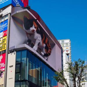 9月中旬:新宿駅周辺をお写んぽ。其の壱/靖国通りから新宿駅へ