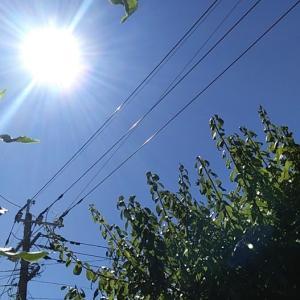 8月 5日 今日も、猛暑日だった。朝から強烈な陽射し。週末は、台風接近?