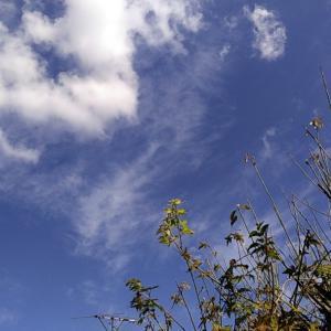 10月18日 今朝は冷えた。晴天の月曜日で始まりました。