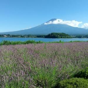 富士山の絶景と川口湖畔の大石公園、ブルーベリー狩りの旅について