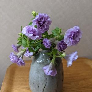 ペチュニア八重咲きラベンダー