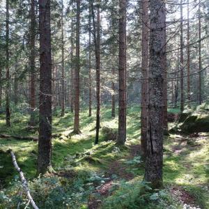 森でベリー摘み