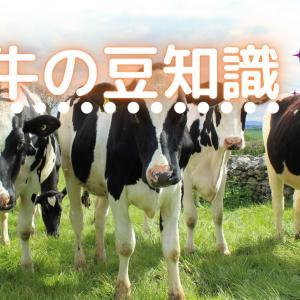 【知らなかった!】牛の豆知識