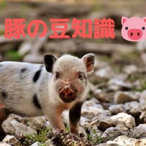 【意外と知られていない?】豚の豆知識