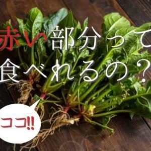 【捨てちゃダメ!】ほうれん草の根の赤い部分は食べれるの?