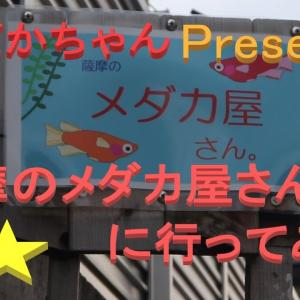 【メダカちゃんpresents】薩摩のメダカ屋さん。に行ってみた。