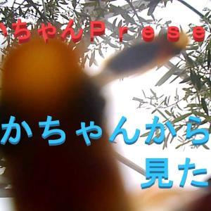 【メダカちゃんpresents】メダカちゃんのバケツに潜ってみた。