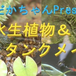 水生植物とタンクメイトの紹介。