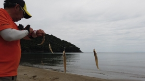 2021年6月12日 福井県高浜町奥難波江キス釣行 数釣りは疲れる!!