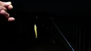 2021年8月27日兵庫県・京都府北部新規開拓ランガンキス釣行(2日目)in宮津市獅子ヶ崎・西宮津公園