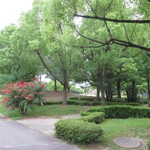 Gifu / Nagara Park