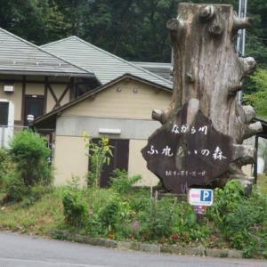 Gifu / Mount Dodogamine