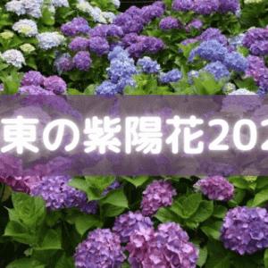 関東のあじさい(紫陽花)2021の名所9選を紹介!絶景スポットも解説