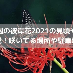 野川公園の彼岸花2021の見頃や開花状況を解説!咲いてる場所や駐車場情報も