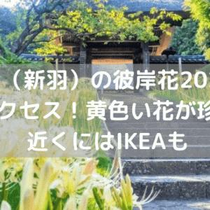 西方寺(新羽)の彼岸花2021の見頃とアクセス!黄色い花が珍しい!近くにはIKEAも