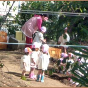 庭の花   ブットレア イエローマジック   ホワイト他                                                                                                                                              幼稚園児のいもほり