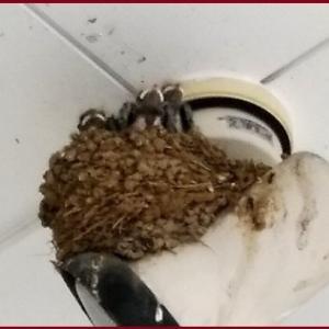 つばめの巣 & アザミのお花にハチ バラに虫