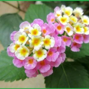 庭の花達とツマグロヒョウモンチョウ