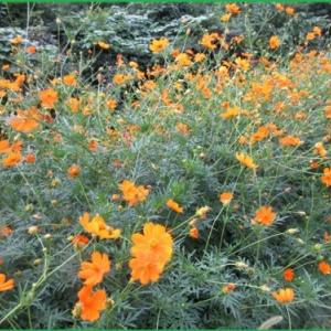 ウオーキングで出会ったお花と庭の花