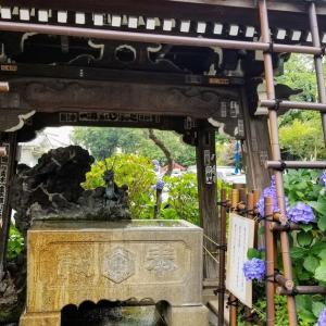 都会のオアシス・紫陽花を見に白山神社へ