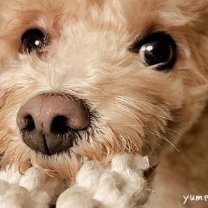 【小型犬の噛むおもちゃ】11品使ってみた正直な感想&お気に入り