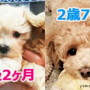 愛犬のお鼻の色が変わったよ!原因&いつから変化したか検証