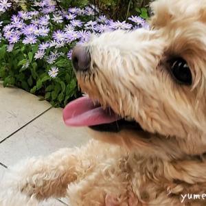 嫌~な虫から愛犬を守りたい!安全な虫よけスプレーどれがいい?
