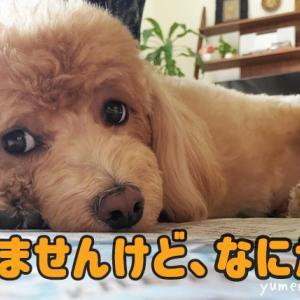 うちの邪魔する犬【パソコン&新聞編】